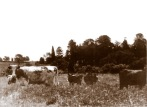 Looking towards Yallambie from Lower Plenty during the farming era.