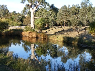 """River red gum and pond at """"Streeton Views"""", Yallambie, March, 2015"""