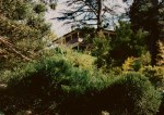 Homestead photographed through the trees, 1995.