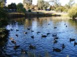 "Ducks on the pond at ""Streeton Views"", Yallambie, March, 2015."