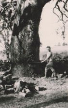 Tree felling at Lower Plenty in the early 1920s.